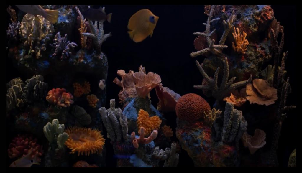 aquarium_screen1